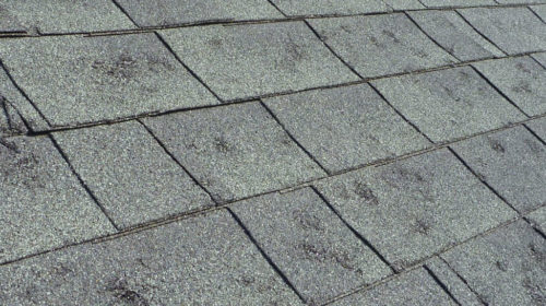 Photo of a damaged shingles from a hail storm.